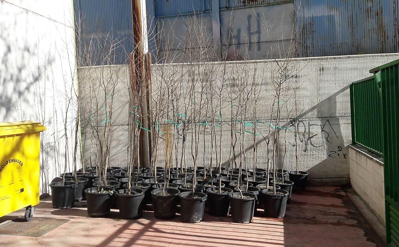 Plantación de 50 nuevos árboles en el municipio