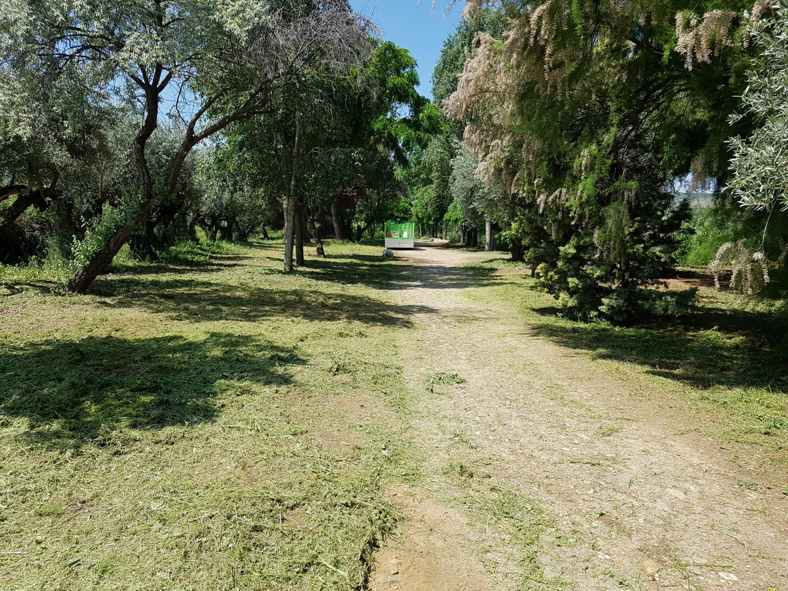 En marcha los nuevos trabajos de desbroce y mantenimiento en la laguna El Raso