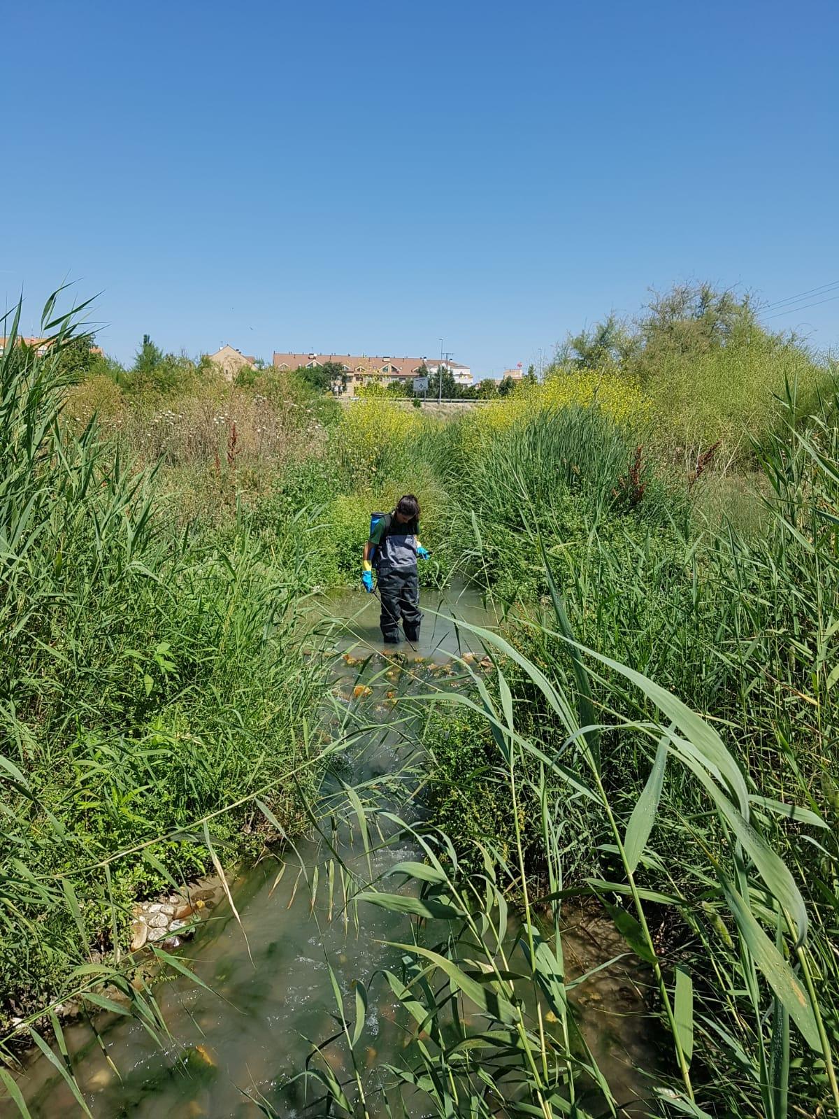 Nuevas actuaciones en el arroyo Pantueña para controlar la mosca negra
