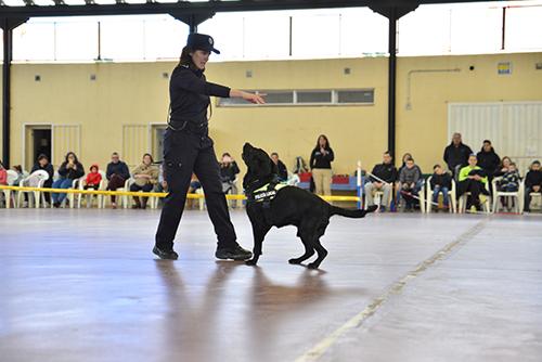 Éxito de la I Exhibición Canina en Velilla de San Antonio
