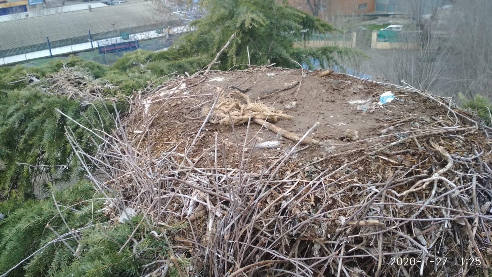 El Ayuntamiento de Velilla retira un nido de cigüeñas y otro de cotorras argentinas por riesgo de caída