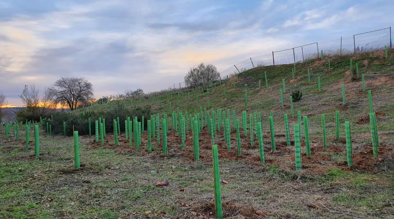 Finaliza la primera fase de plantaciones de la nueva zona forestal en el sector XXIII