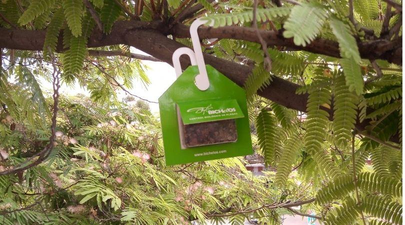 El área de Medio Ambiente sigue apostando por métodos biológicos contra el control de plagas utilizando mariquitas y avispillas para combatir las plagas de pulgón