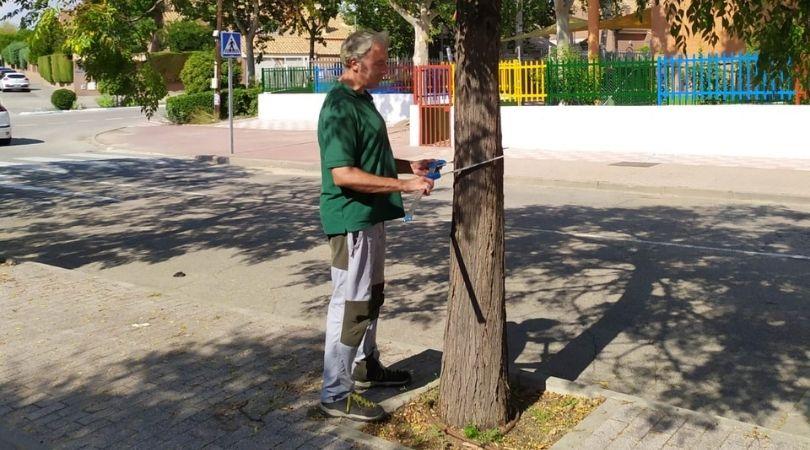 El área de Servicios Generales está actualizando el inventario de arbolado urbano