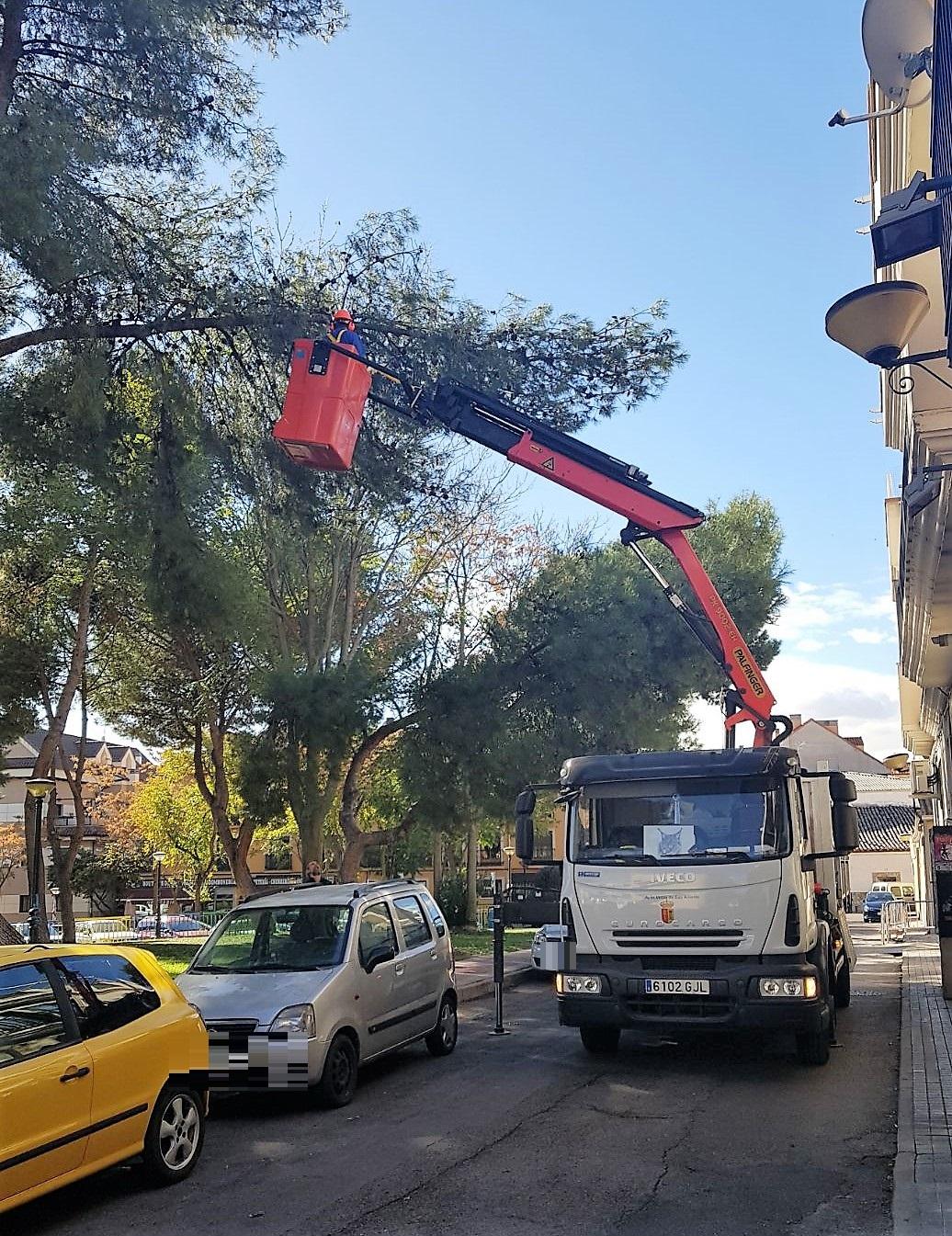 Comienzan los trabajos de poda en el municipio