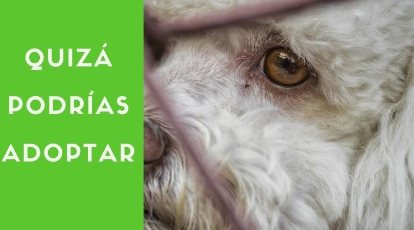 """""""Quizá podrías adoptar"""", Campaña de concienciación del Ayuntamiento de Velilla de San Antonio"""