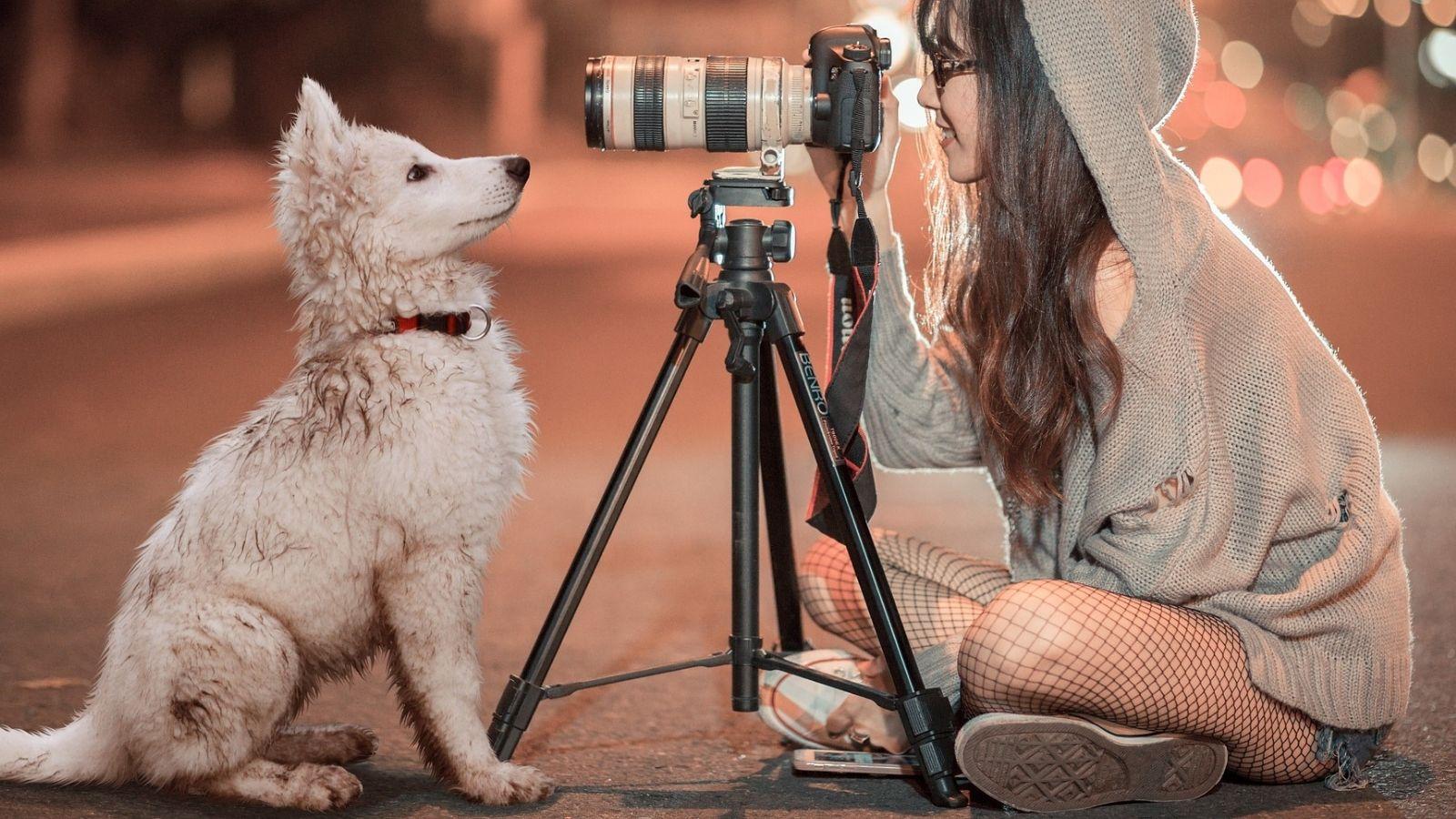 Censar a tu mascota y recoger sus excrementos nos beneficia a todos
