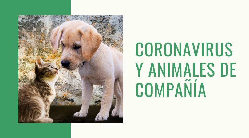 Información sobre coronavirus y animales de compañía