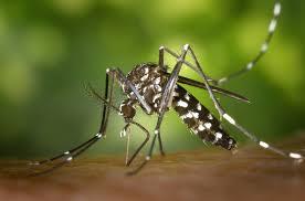 El Ayuntamiento de Velilla de San Antonio toma medidas contra el mosquito tigre