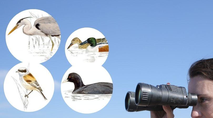 El entorno de la laguna Miralrío albergará un observatorio de aves