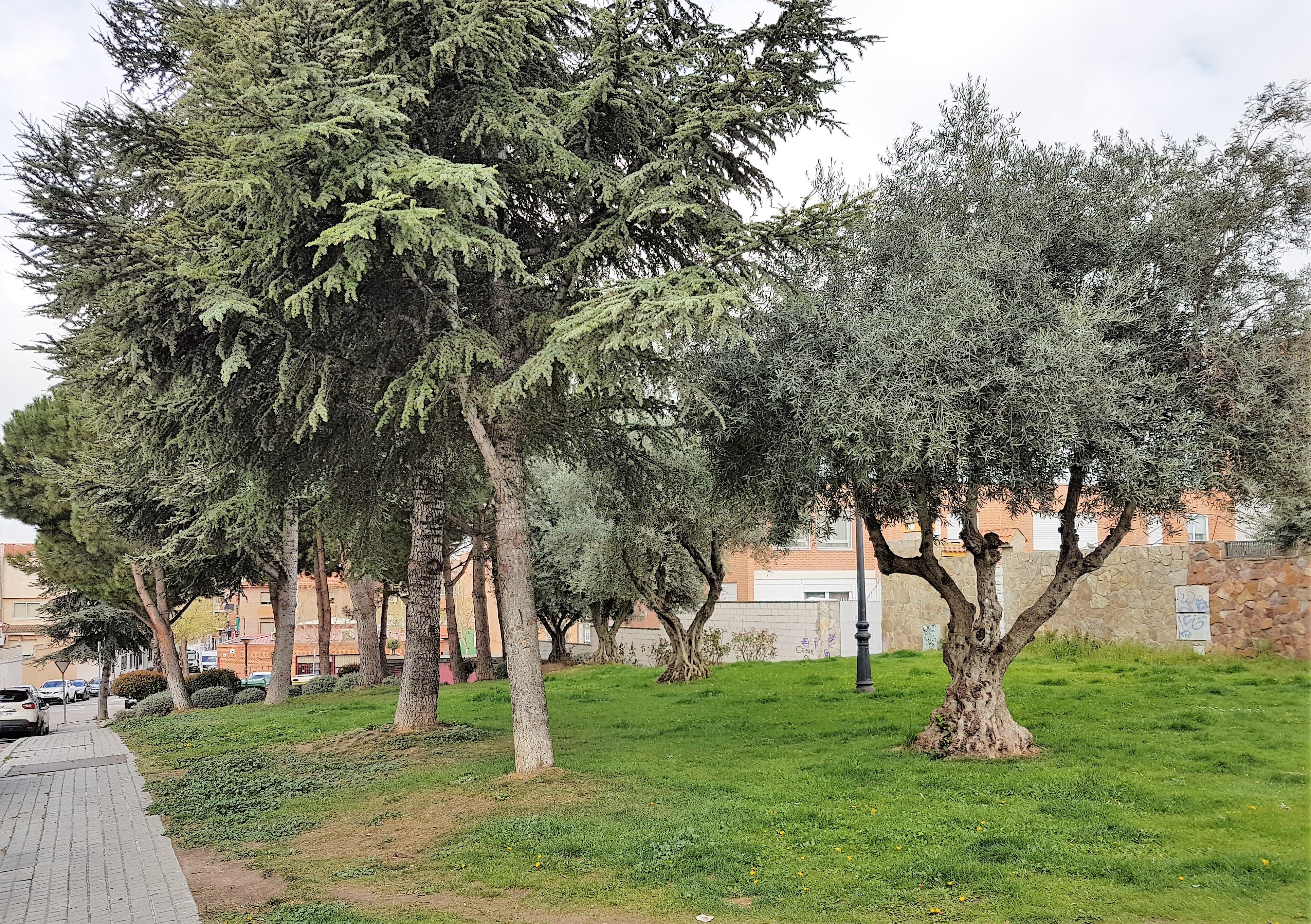 El Ayuntamiento de Velilla está procediendo a la revisión del arbolado del municipio