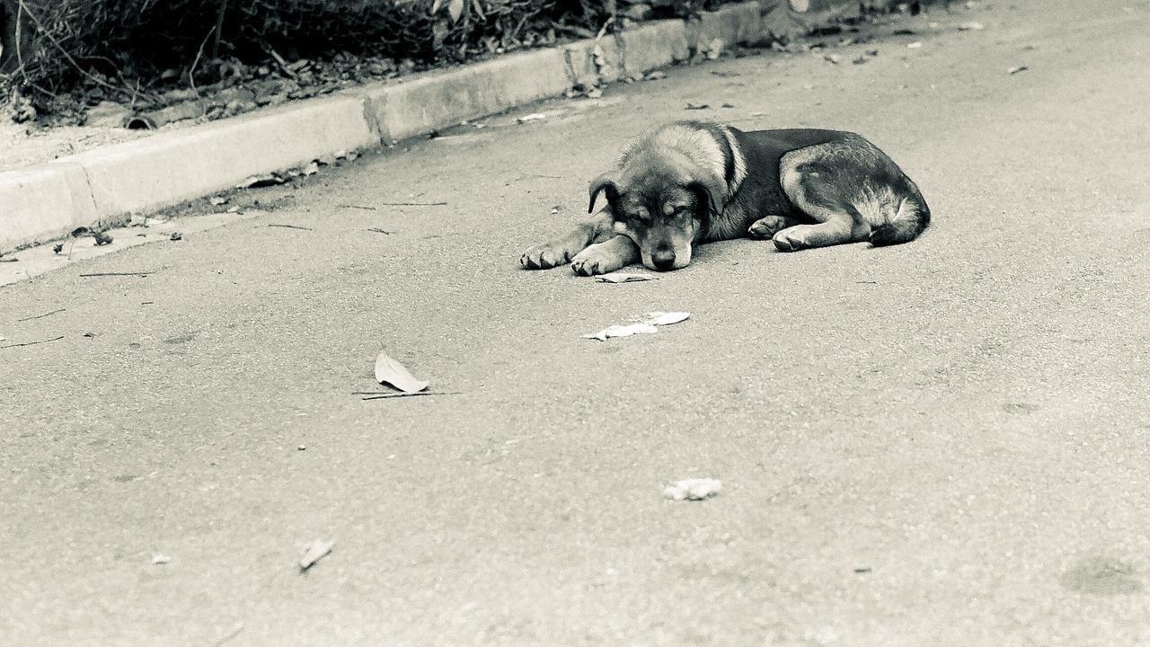 Ya está en marcha el servicio de urgencia de recogida de animales abandonados en la vía pública del Centro de Protección Animal